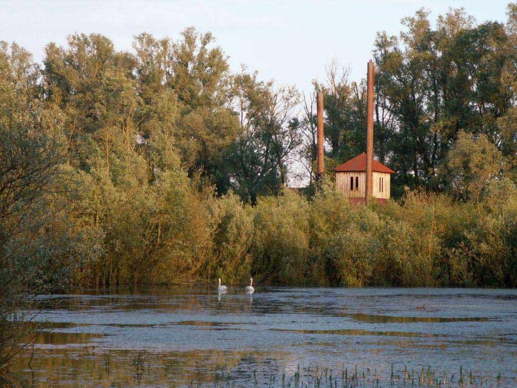 Kijkhuis met zwanen - foto: Peter Eekelder