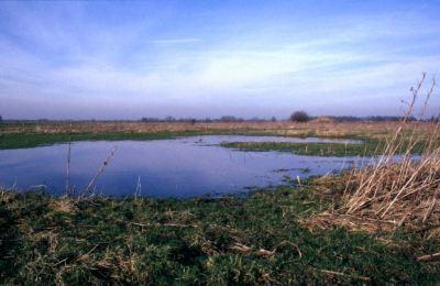 Nat grasland in de Bemmelse Waard - foto: Twan Teunissen